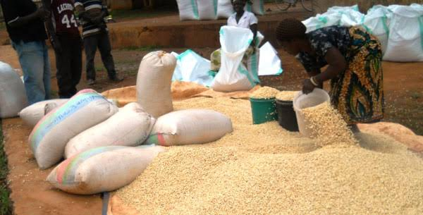 CCM directs RCs, DCs to monitor farmers' maize sale