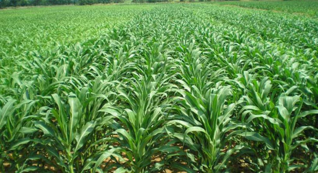 Farmers, producers upbeat on use of nutrient-rich fertiliser