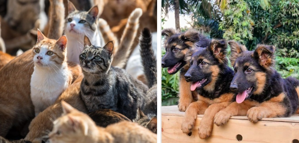 Over 300 Iramba cats, dogs vaccinated to curb rabies