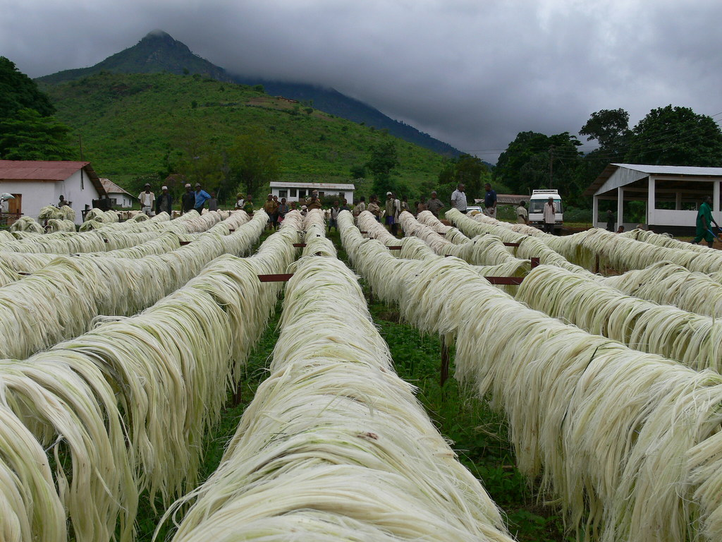 Plans underway to revive sisal production