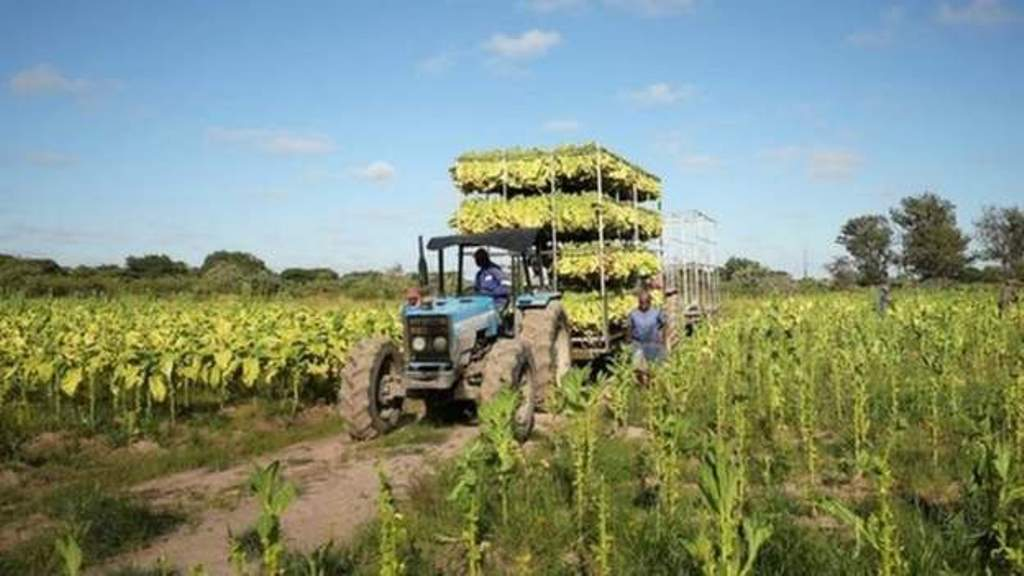 Zimbabwe to return 'a mere 37 farms' to foreigners