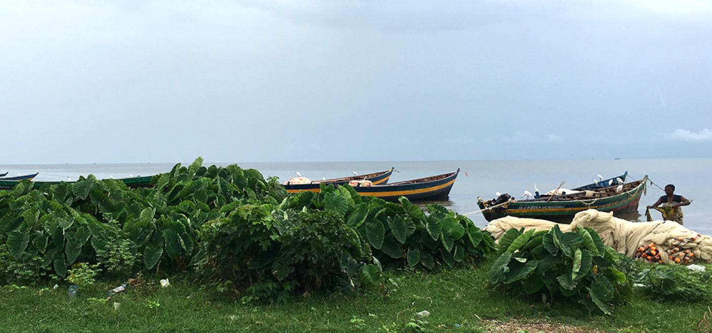 Let's mitigate vegetation loss to protect Lake Victoria ecosystem