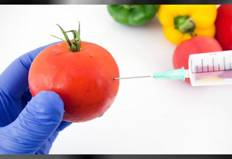 GMO research not prohibited in Tanzania - expert