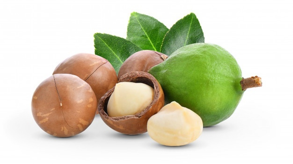 Commercial farm to grow macadamia on large-scale