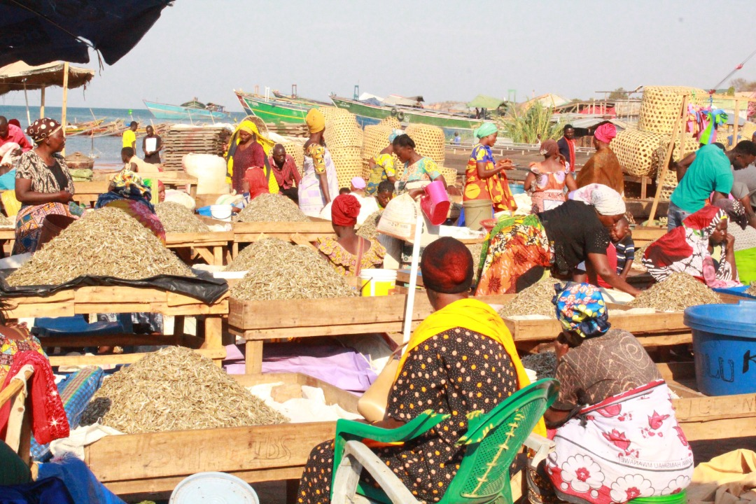 Heavy post-harvest losses weigh on Lake Tanganyika fish value chain