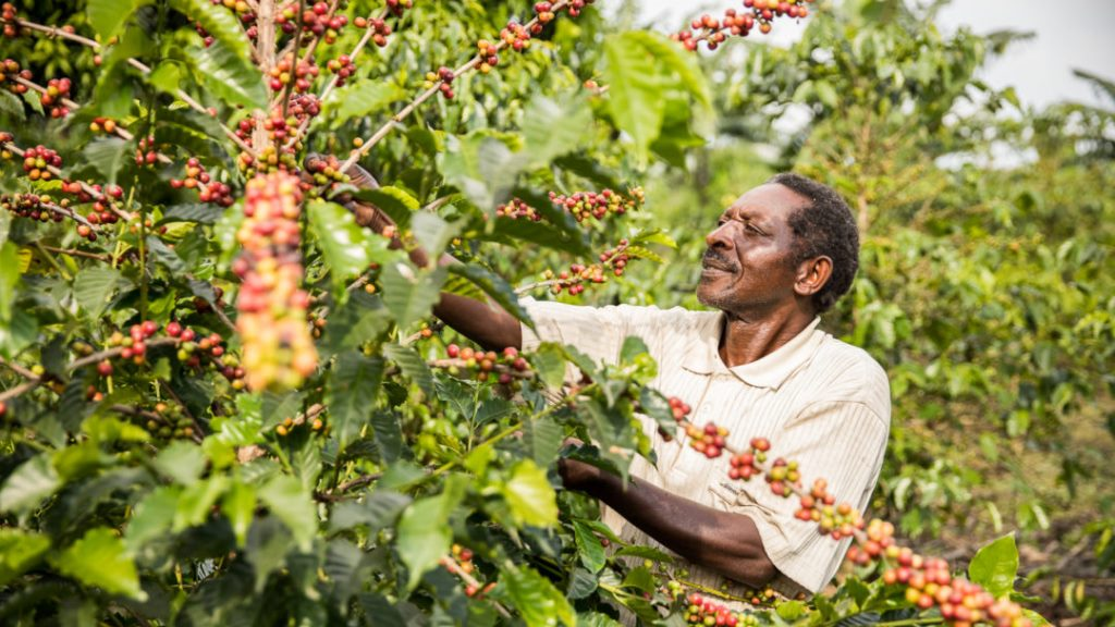 Coffee farmers urged to comply with international certification