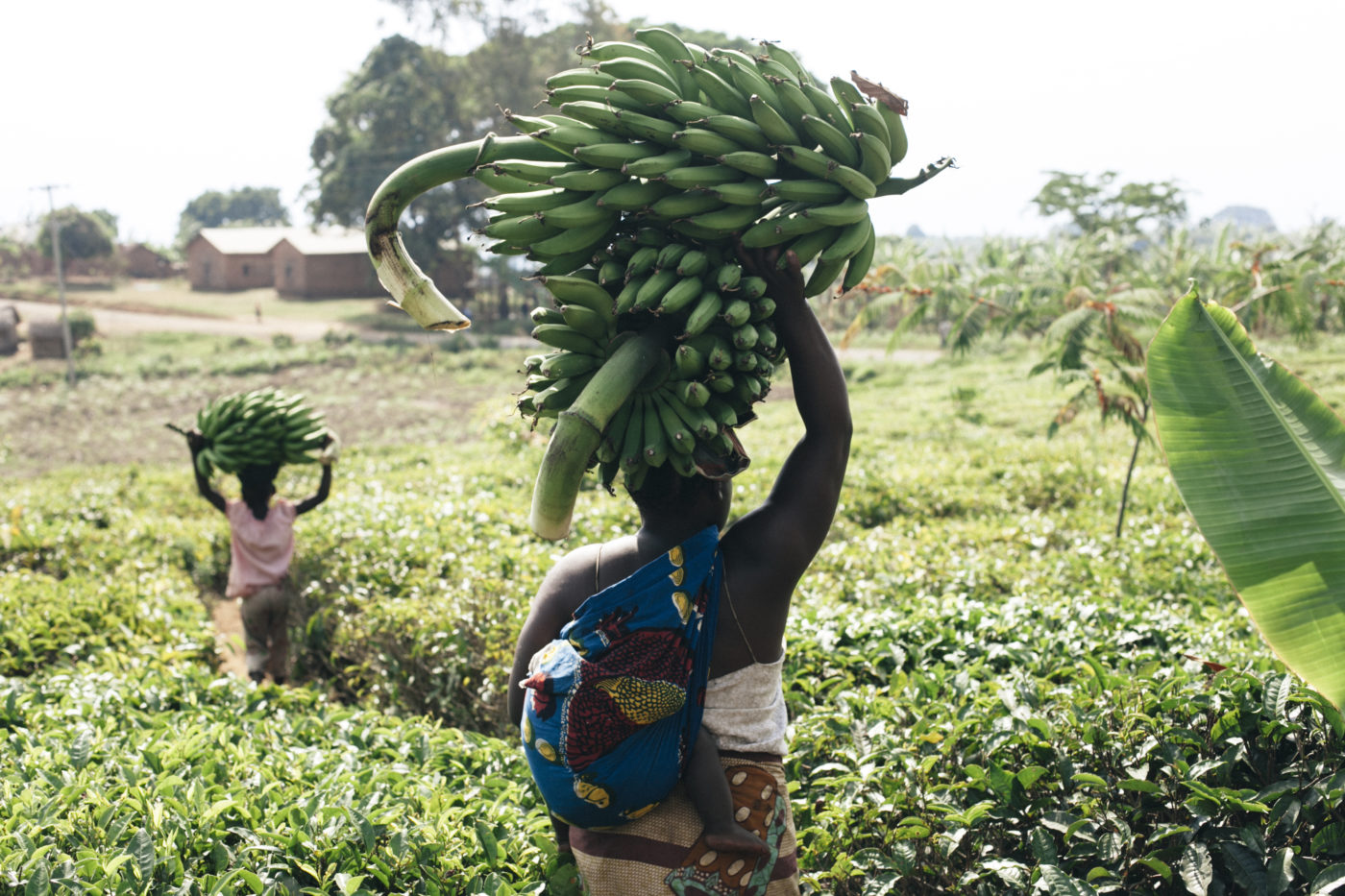Company links farmers with industries for market