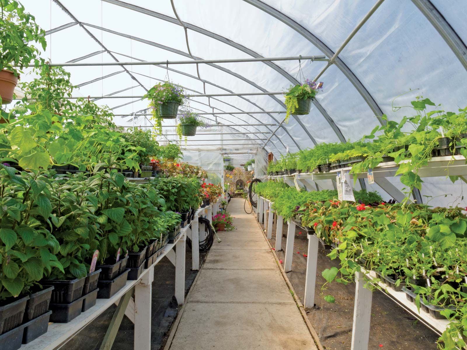 Farmers urged to venture into horticulture for EAC market