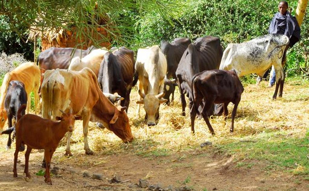 Heed livestock researchers' advice to improve products, herders told