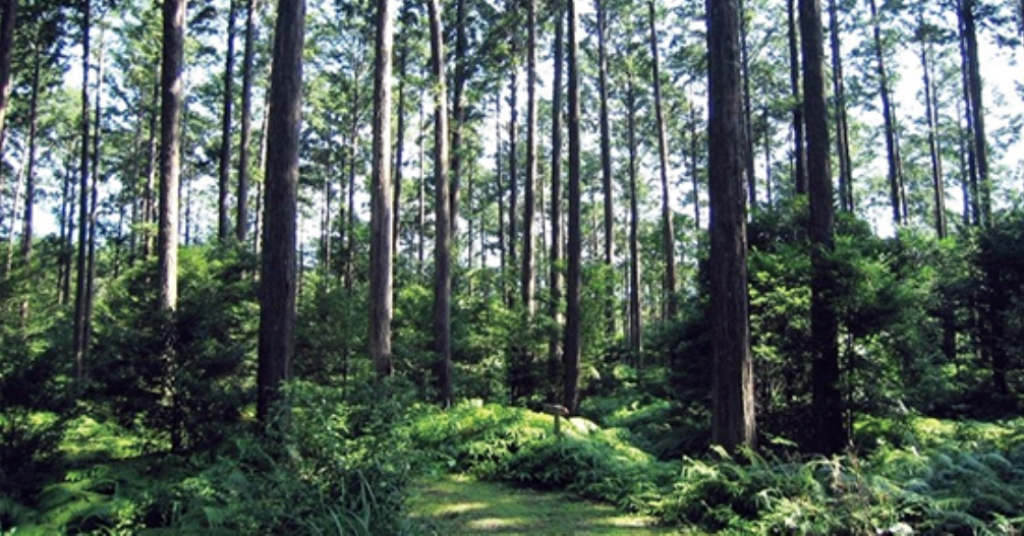 Why are forests important resources to the pharmacetical industry