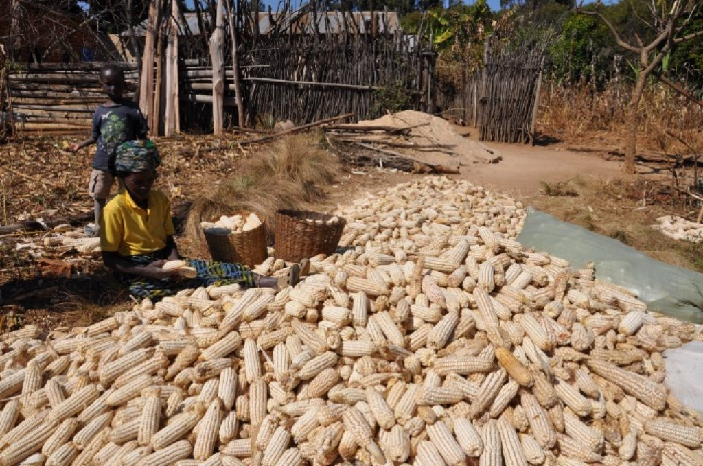 Radical change as nation woos investors to boost crop, livestock, fisheries value chain