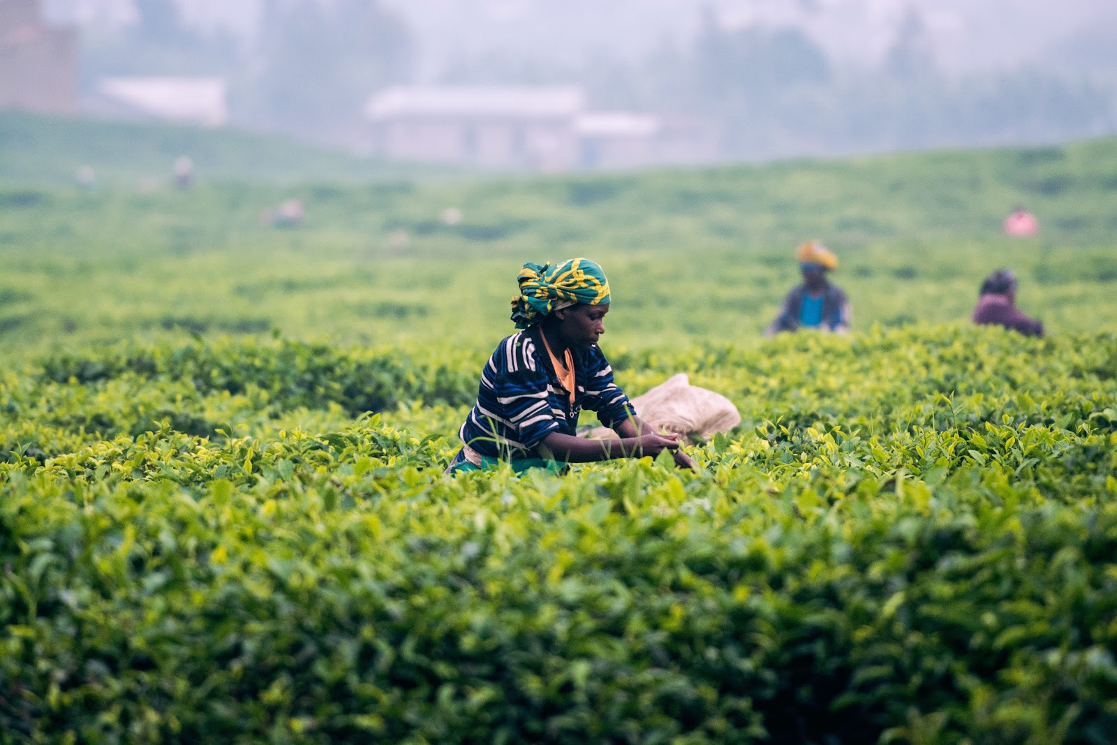 Progressive reforms can turn the tide for farmers