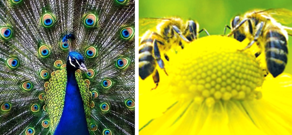 The effects of colours among animals in national parks