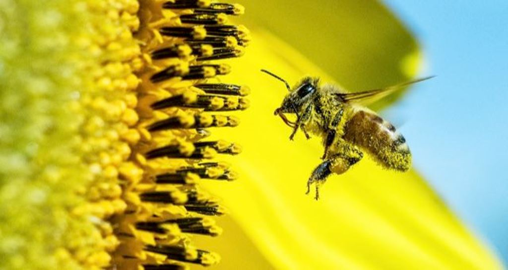 The mysteries of life cycle for honeybee