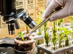 Gene editing technology in agriculture, time for African governments to intervene
