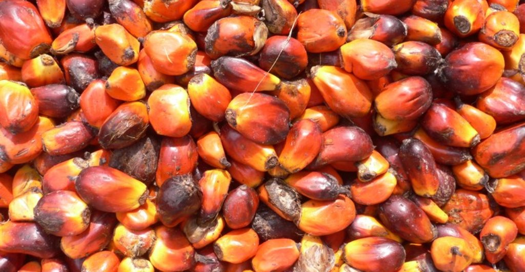 Stakeholders call for modern palm oil processing plants