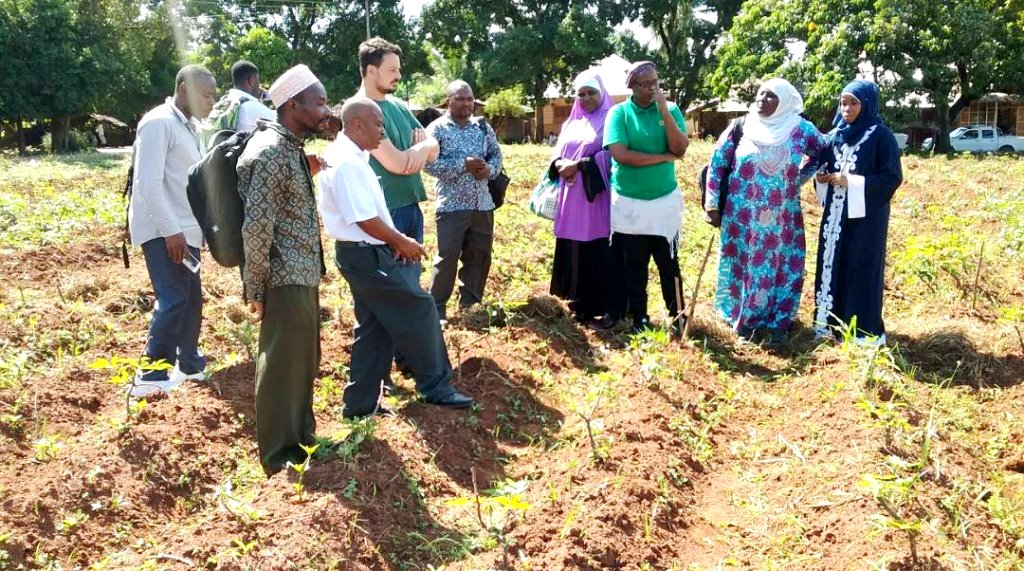 Cassava production pick up with modern farming ways
