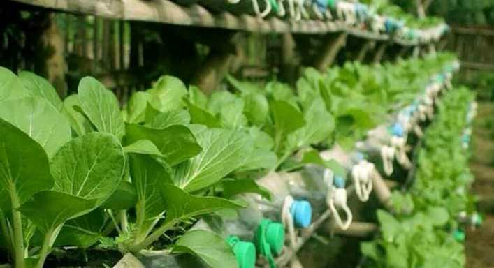 Tz horticulture for boom as stakeholders strategize