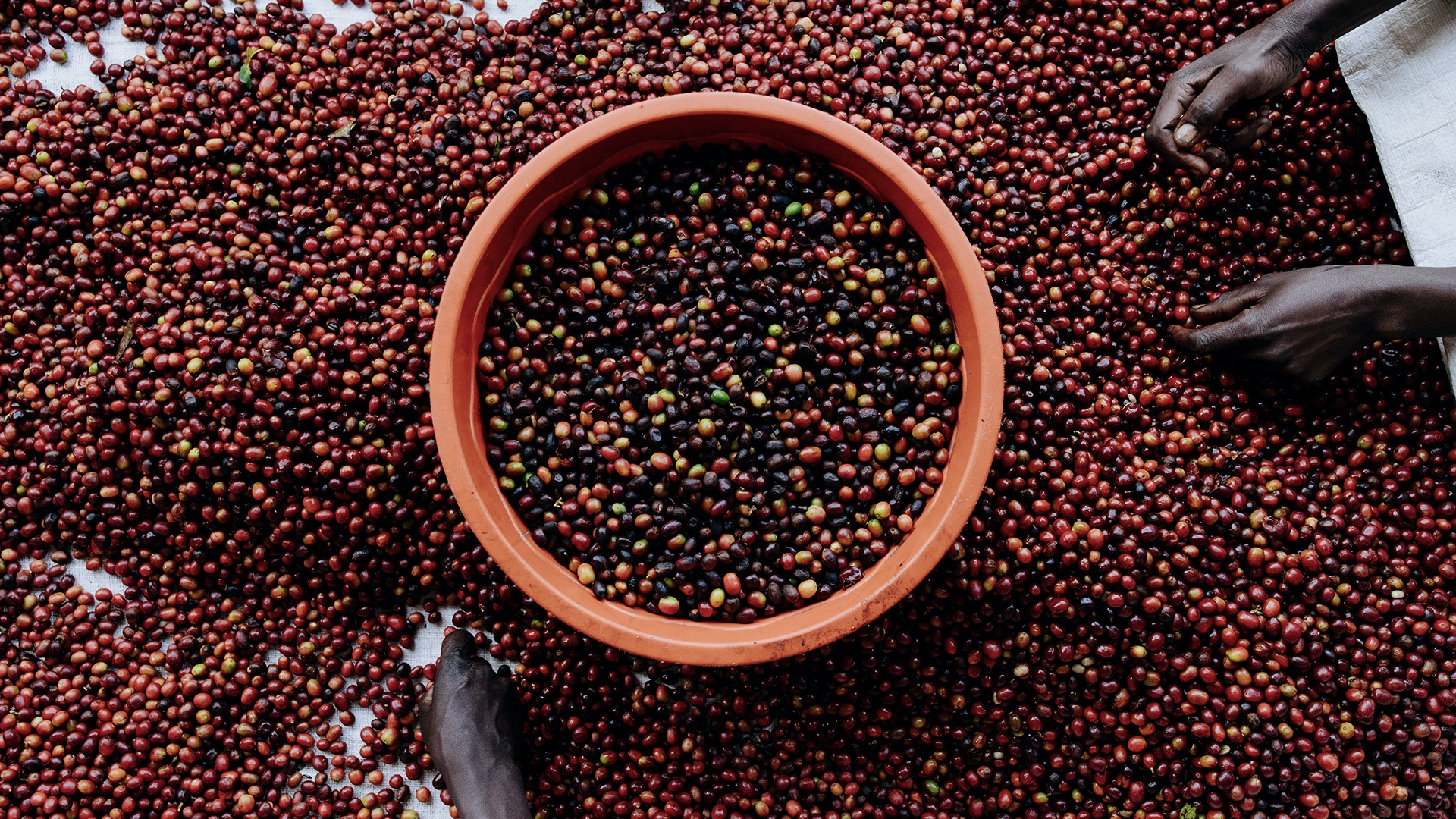 Population growth hampers coffee production