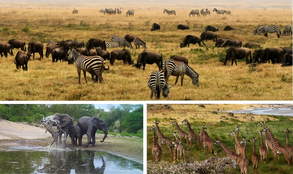 Tawa collects over 20bn/- from wildlife resources