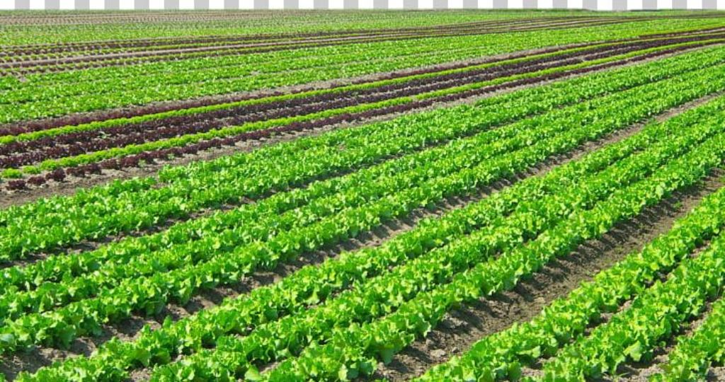 Youth encouraged to engage in cash crop production