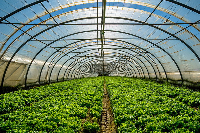 Horticultural exports rise  to 800m USD in five years