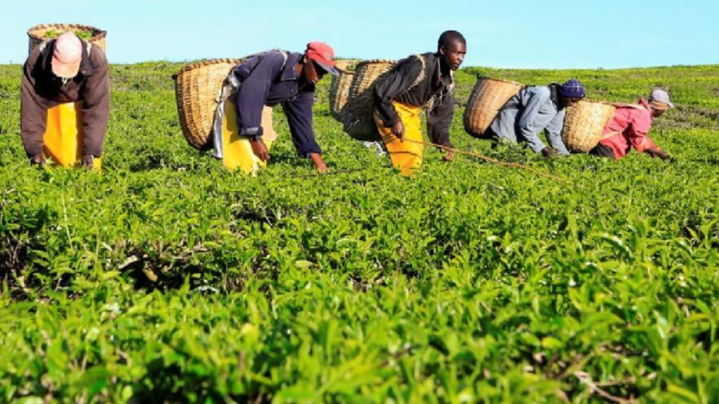 Farm sector benefits from brewer's scholarship programme