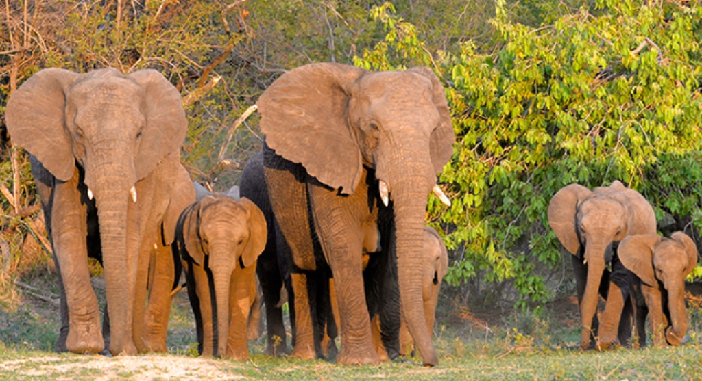 Championing conservation activities in Africa