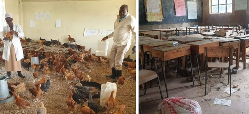 Coronavirus in Kenya: How it turned classrooms into chicken coops
