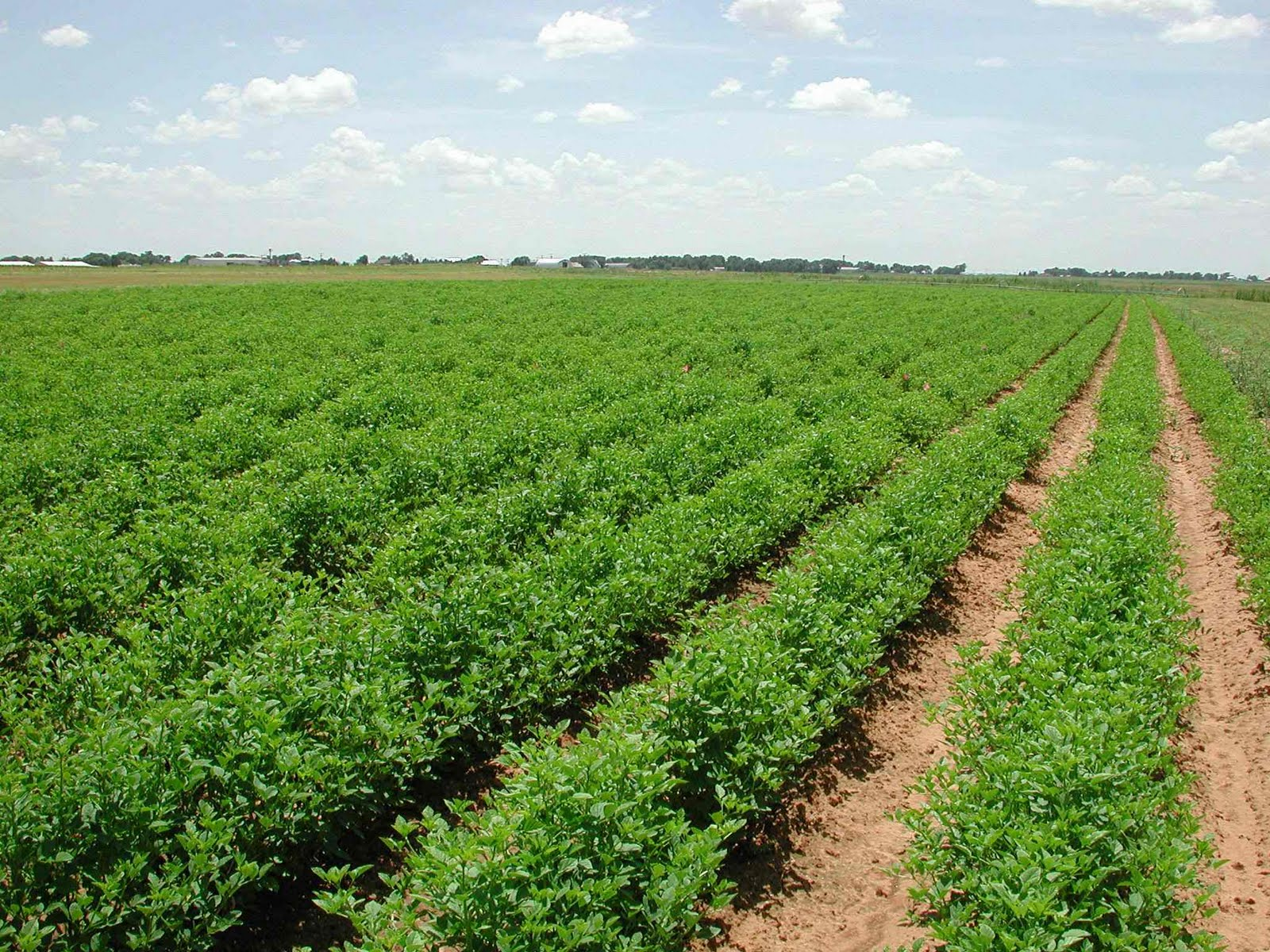 Stress put on agriculture snags linked solutions