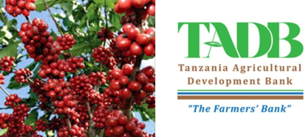 TADB dishes out 27bn/- for coffee purchase in Lake Victoria Zone