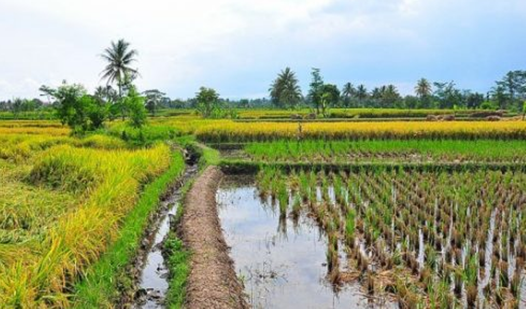 How the private sector can push irrigation agenda