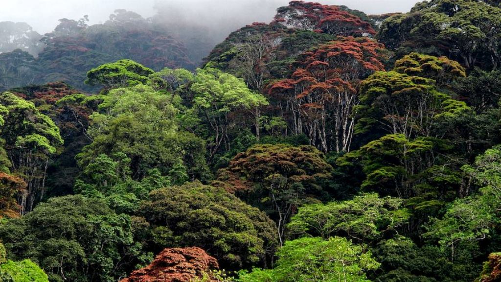 Destroy forests today, meet bleak future ahead