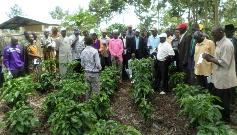 TACRI increases coffee production in Kagera