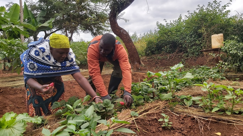 Horticulture lifts lives of poor families