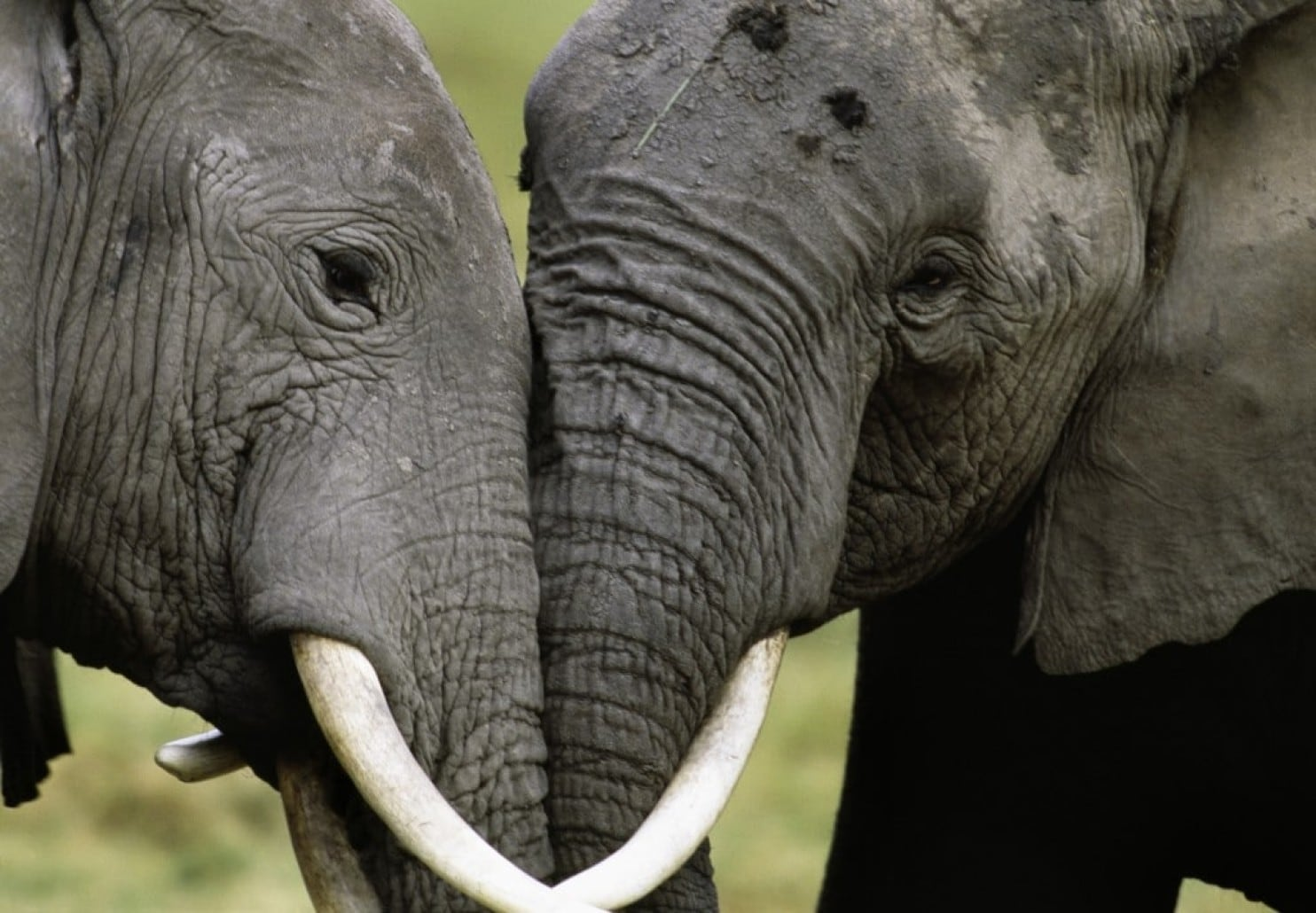 Poachers slammed with 80 year sentence for illegal poaching
