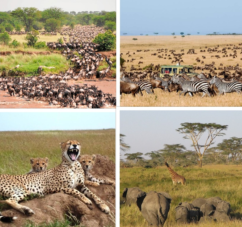 Why we have to maintain natural beauty of Serengeti