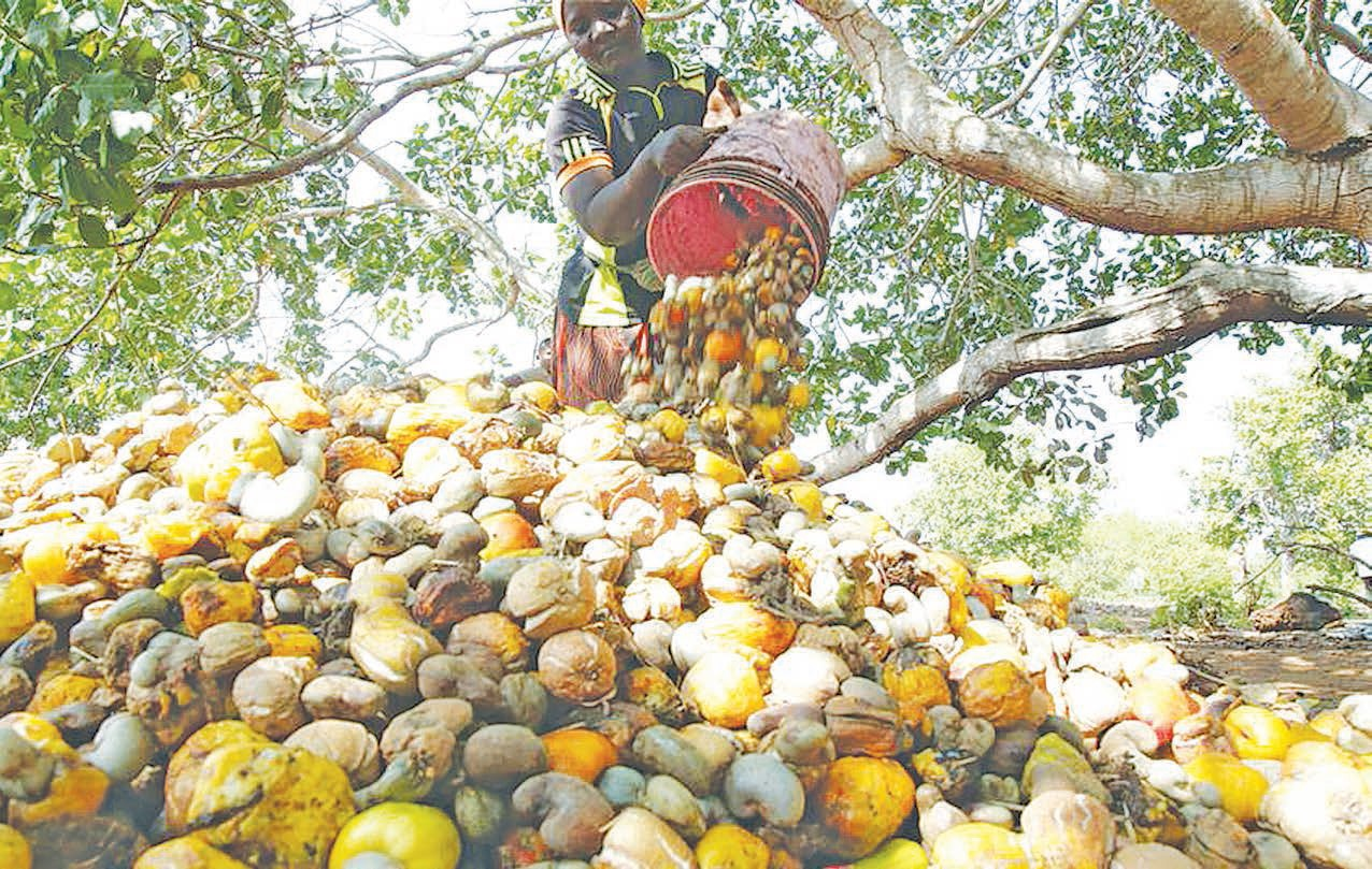 Local conglomerate plans to create cashew industrialists