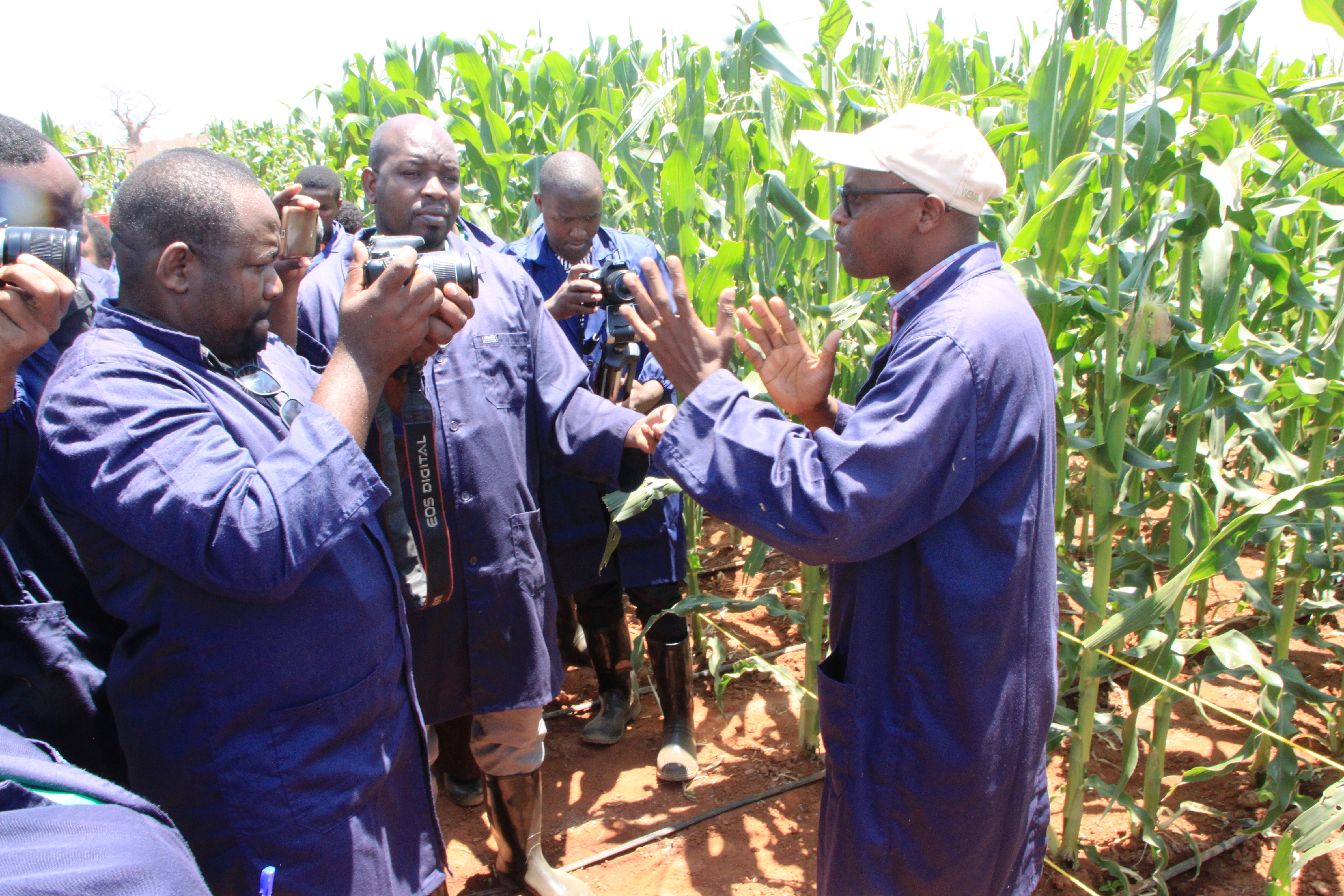 Opening doors to GM maize vital to improve yields, curb hunger