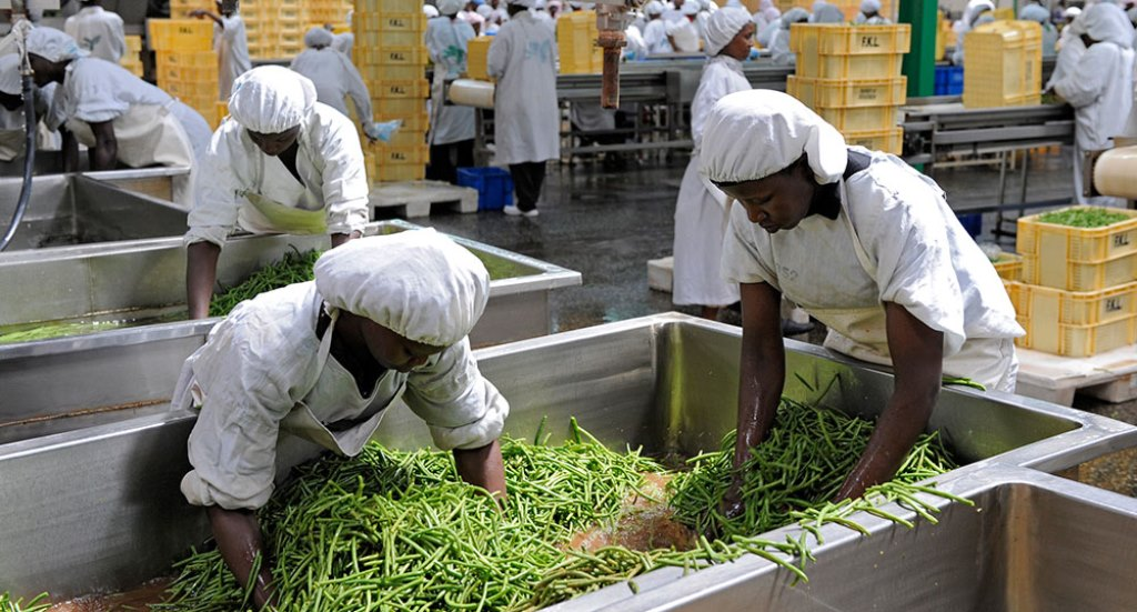 Investor efforts boost agro processing sector