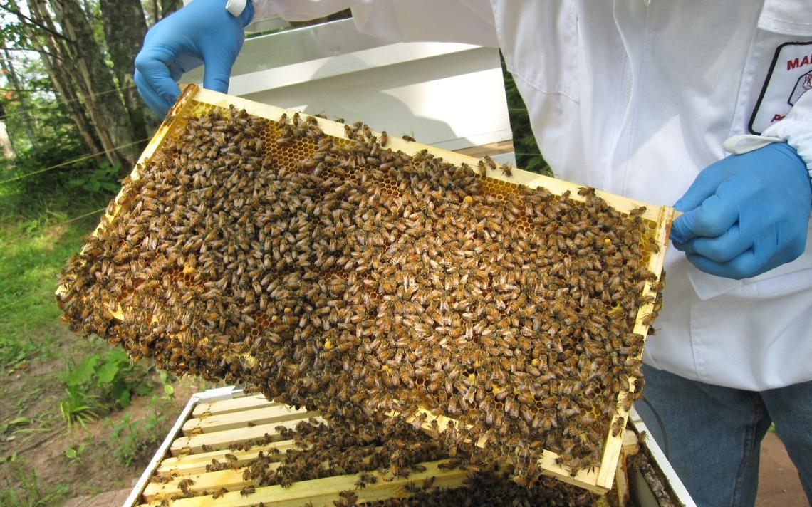 Beekeeping centre set to boost honey production